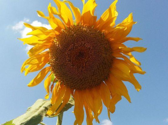 Украинская органическая продукция покоряет международные рынки