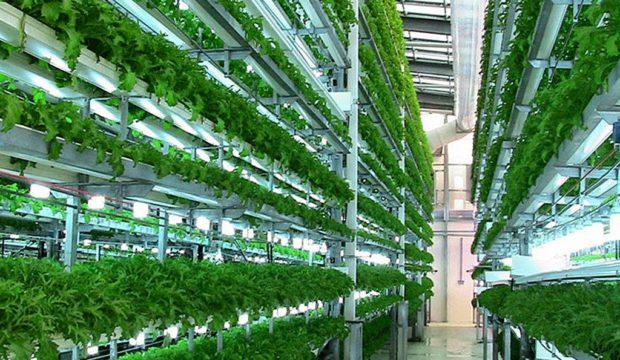 vert-farm-0.jpg