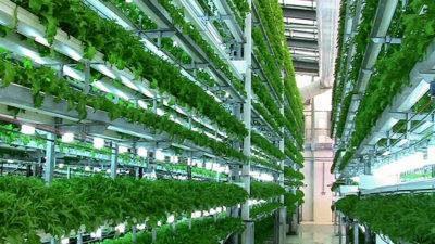 У Дубаї з'явилася перша вертикальна ферма